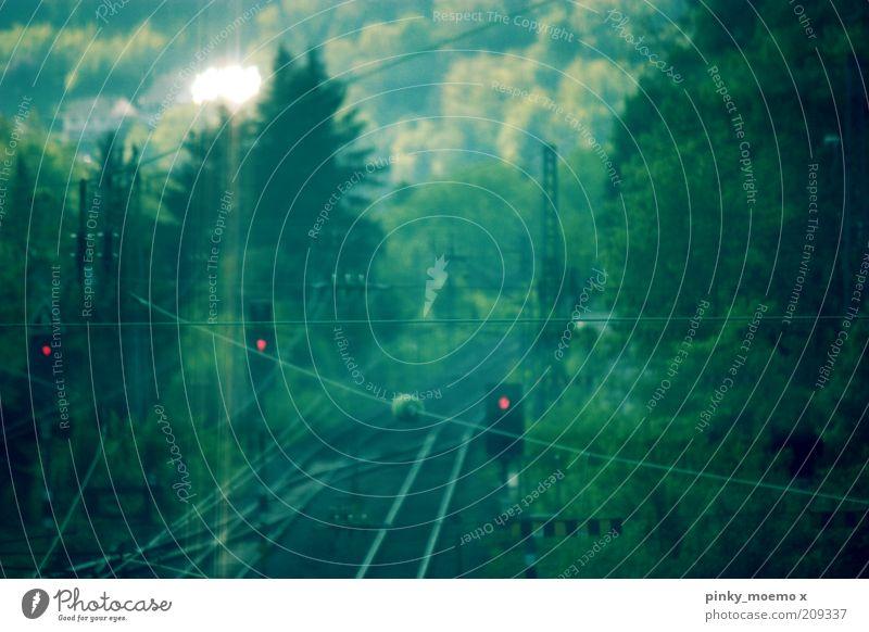 Trainstop grün Wald dunkel hell Eisenbahn Gleise Ampel Oberleitung Schienennetz Haltesignal