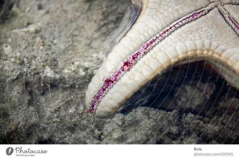 .Tentakel Tim Meer Natur Tier Wasser Küste Seeufer Korallenriff Wildtier Pfote Stein liegen schleimig Außenaufnahme Nahaufnahme Detailaufnahme Menschenleer