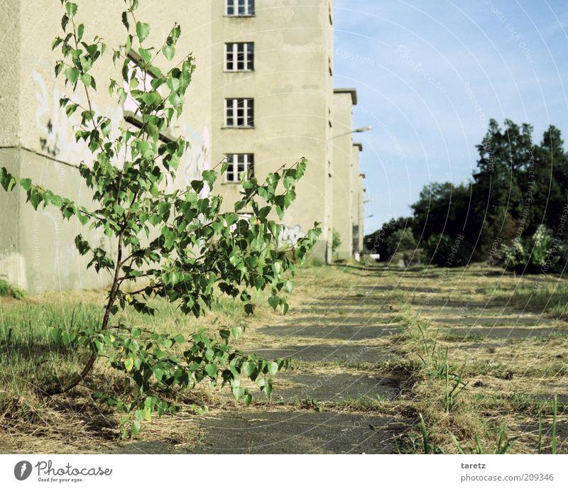 Natur kommt zurück Baum Stadt Pflanze Ferne Kraft groß Beton Zeit Fassade leer Wachstum Zukunft trist Vergänglichkeit Verfall