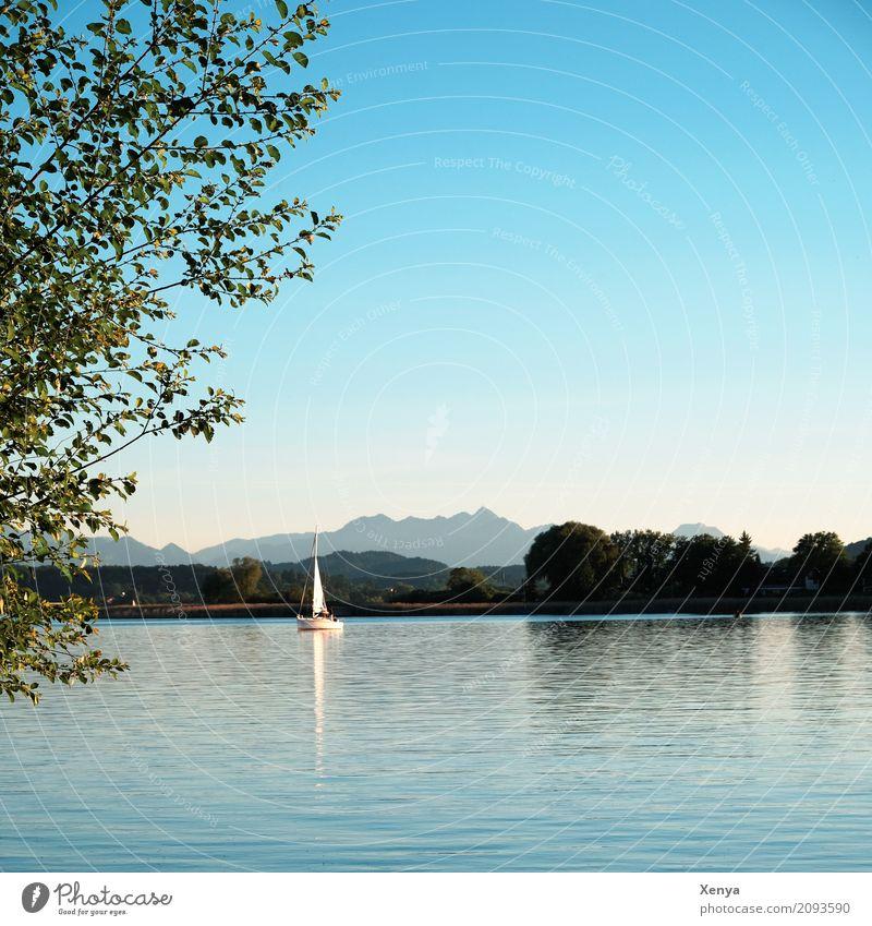 Chiemsee Segeln Sommer Natur Schönes Wetter See blau Freizeit & Hobby Ferien & Urlaub & Reisen Segelboot Außenaufnahme Menschenleer Textfreiraum oben Tag
