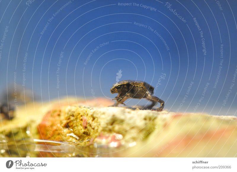 Horst winkt Tier Frosch stehen klein winken Tierjunges lustig winzig schön gepunktet Nahaufnahme Makroaufnahme Froschperspektive Tierporträt Hintergrund neutral