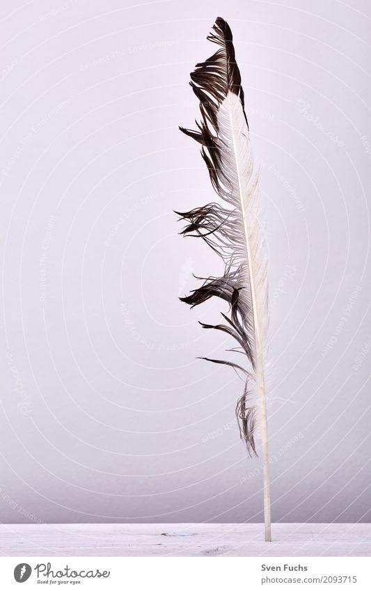 Feder Holz weich federn leicht aufgereiht kiel Maserung Lebewesen fliegen Farbfoto Gedeckte Farben Studioaufnahme Menschenleer Textfreiraum links