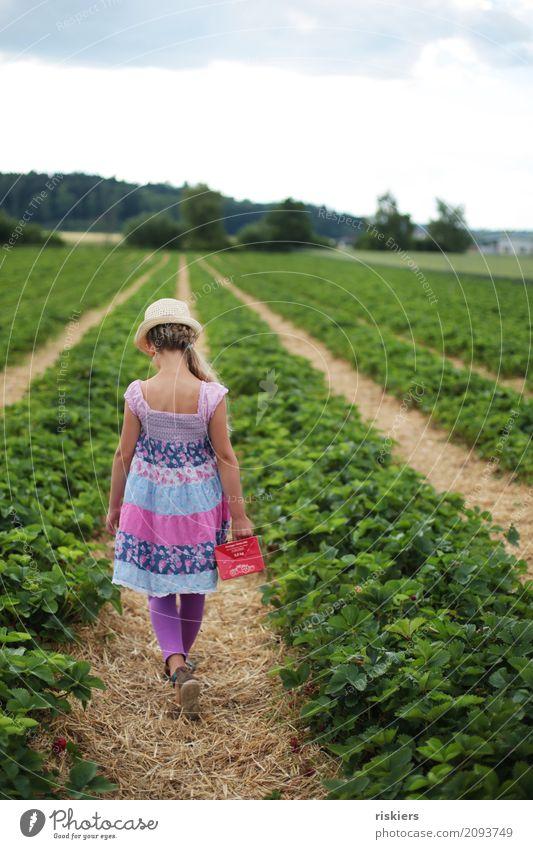 im Erdbeerfeld Mensch feminin Kind Mädchen Kindheit 1 8-13 Jahre Umwelt Natur Landschaft Pflanze Frühling Sommer Schönes Wetter Erdbeeren Feld gehen Blick frei