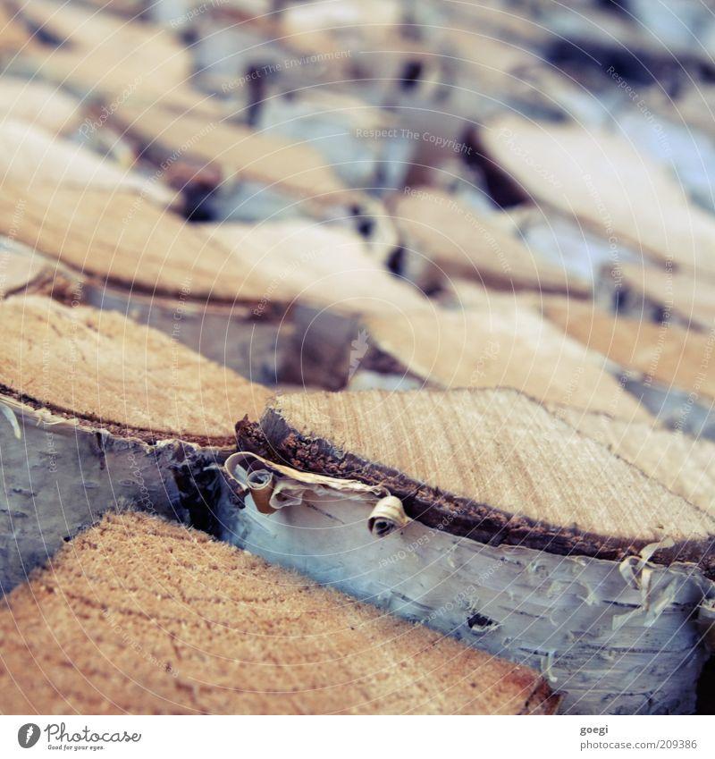 4.2 kWh/kg Baum Birke Holz Brennholz Brennstoff brennbar Spaltholz Birkenrinde Baumrinde Stapel Scheiterhaufen Farbfoto Außenaufnahme Menschenleer