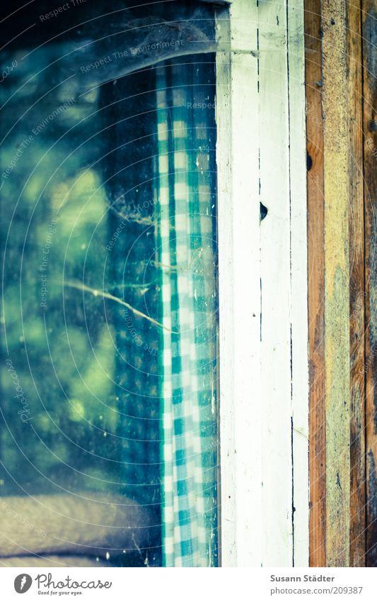 Abstellhäuschen Fenster Holz Fensterrahmen Spinnennetz Glasscheibe Gartenhaus Spinngewebe Farbfoto Außenaufnahme Nahaufnahme Tag kariert Vorhang Fensterscheibe