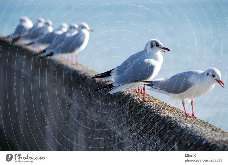 Sightseeing Meer Küste Tier Wildtier Vogel Schwarm sitzen warten Reihe Möwe Aussicht Farbfoto Außenaufnahme Textfreiraum links Schwache Tiefenschärfe