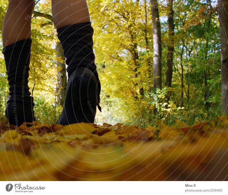 Hallooo Herbst ! Ferien & Urlaub & Reisen Ausflug wandern Mensch Junge Frau Jugendliche Beine 1 Natur Klima Schönes Wetter Baum Blatt Park Wald Stiefel