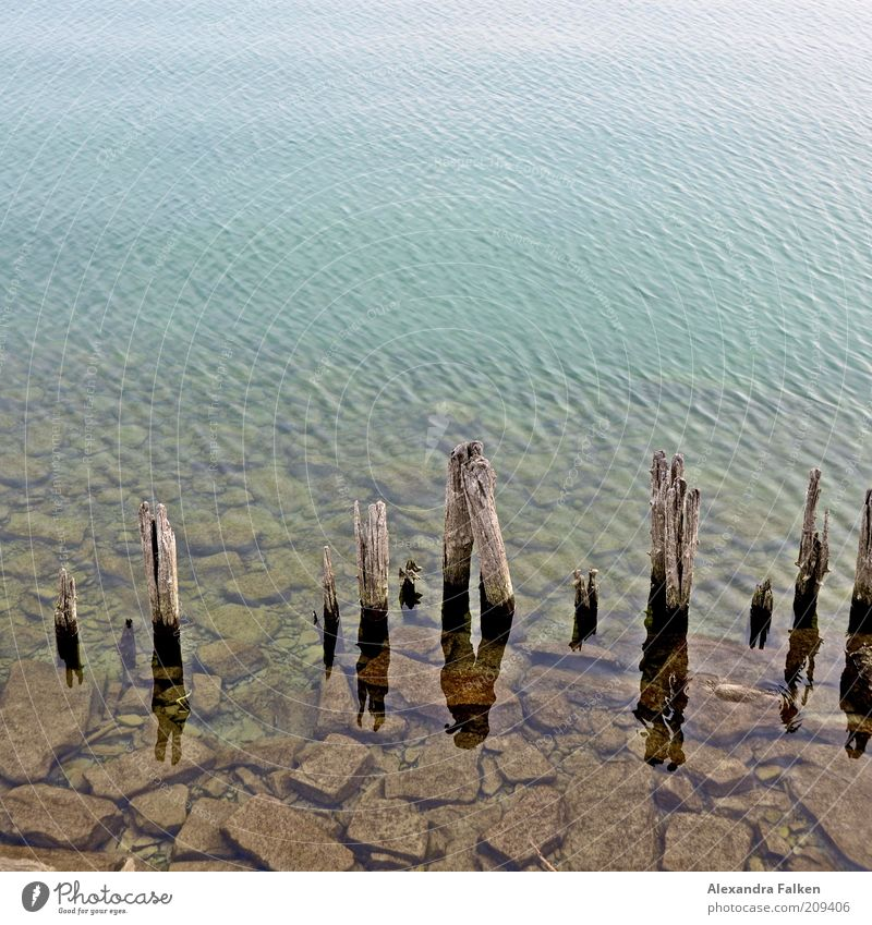Bodensee Natur Wasser alt Holz Stein See Umwelt verfaulen verfallen Verfall Seeufer Pfosten Bodensee Buhne Wasseroberfläche