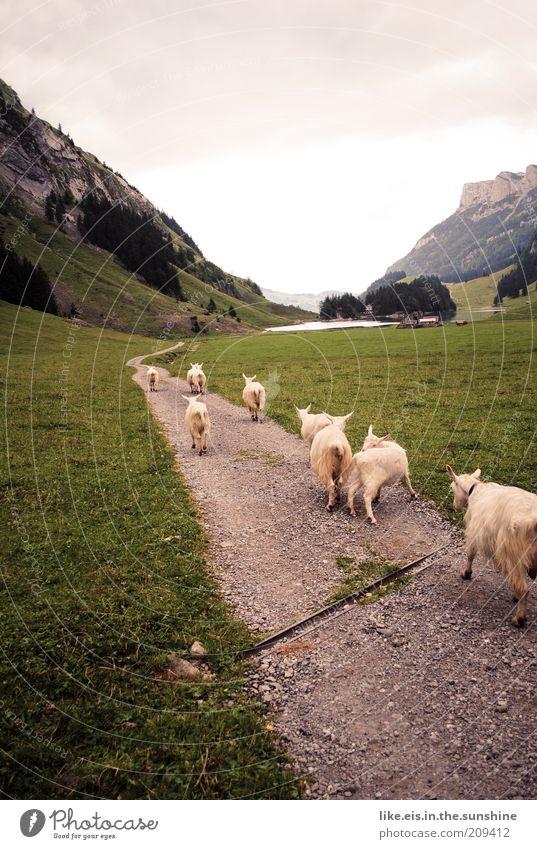 original schweizer bergkitsch Himmel Sommer Ferien & Urlaub & Reisen Wolken Erholung Gras Berge u. Gebirge Frühling Freiheit Wege & Pfade See Zufriedenheit