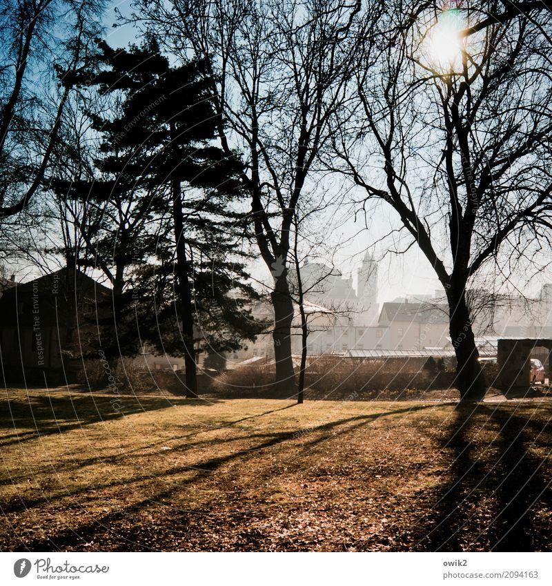 Aus besseren Tagen Umwelt Natur Pflanze Wolkenloser Himmel Frühling Schönes Wetter Baum Gras Zweige u. Äste Park Bautzen Lausitz Deutschland Kleinstadt
