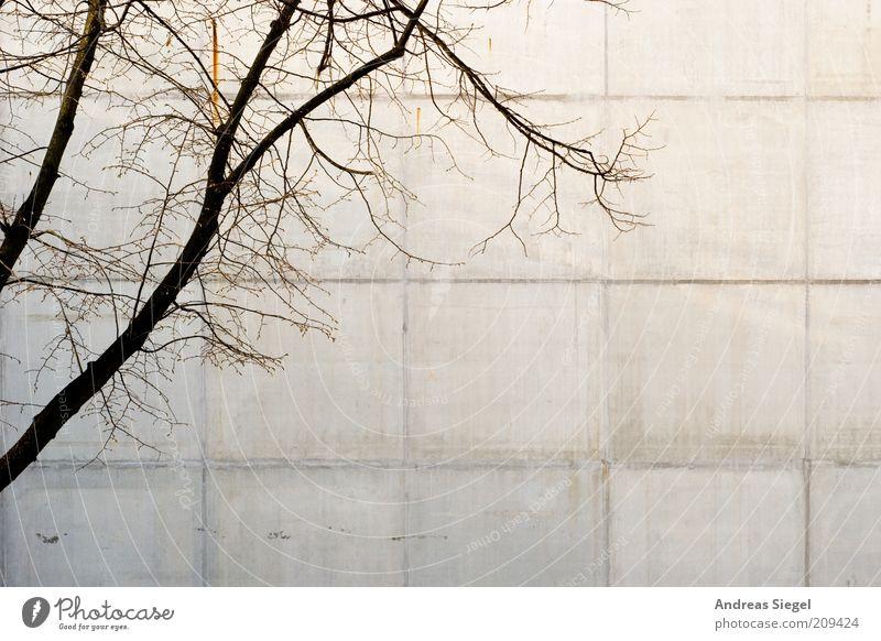 Hamburg Umwelt Natur Baum Haus Gebäude Mauer Wand Fassade Beton Linie trist trocken grau kahl Gegenteil Kontrast Farbfoto Textfreiraum rechts Textfreiraum unten