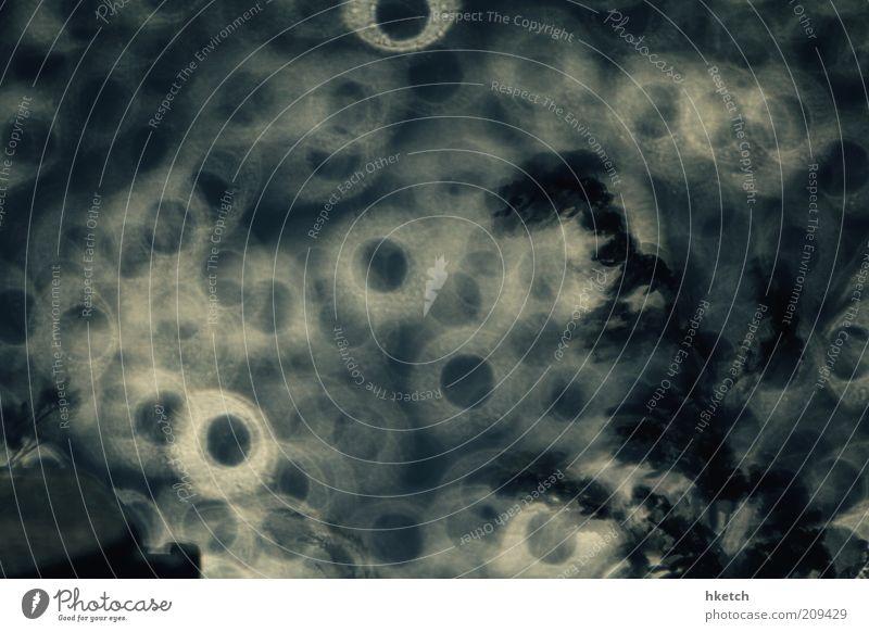 Ringelreihen dunkel blau grau Spiegellinsenobjektiv (Effekt) Kreis Wasser Gegenlicht Silhouette Gedeckte Farben Außenaufnahme Experiment Menschenleer