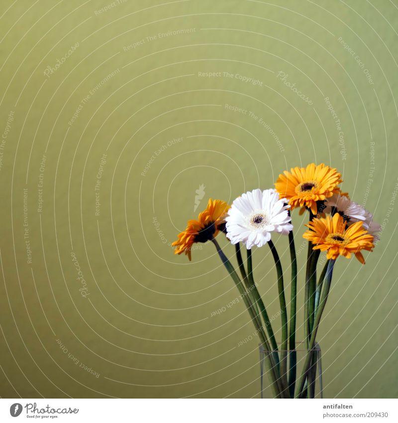 Sommerblumen weiß grün schön Pflanze Blume gelb Wand Blüte Glas natürlich ästhetisch Dekoration & Verzierung Stengel Blumenstrauß Stillleben Vase
