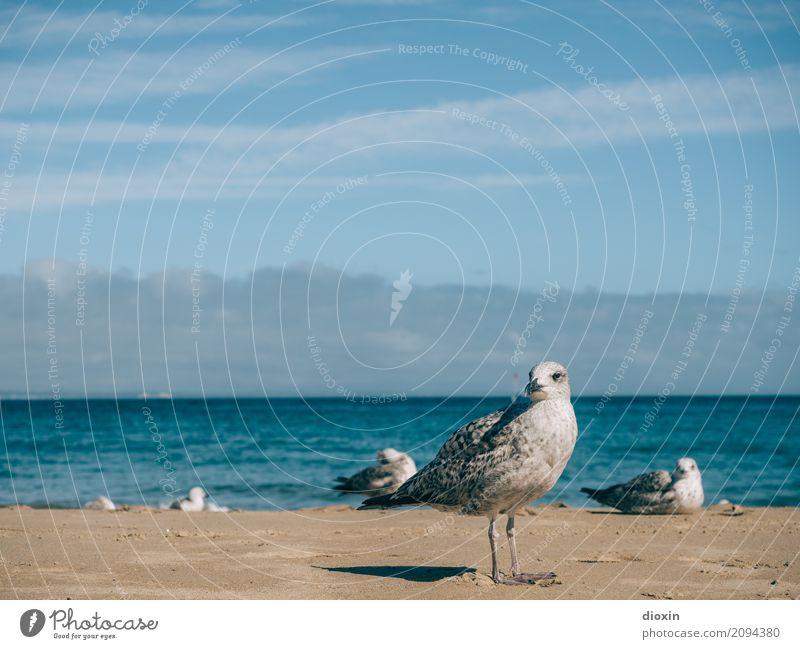 Atlantik Ferien & Urlaub & Reisen Tourismus Ferne Freiheit Sommer Sommerurlaub Strand Meer Insel Wellen Umwelt Natur Tier Himmel Sonnenlicht Küste Vogel Möwe