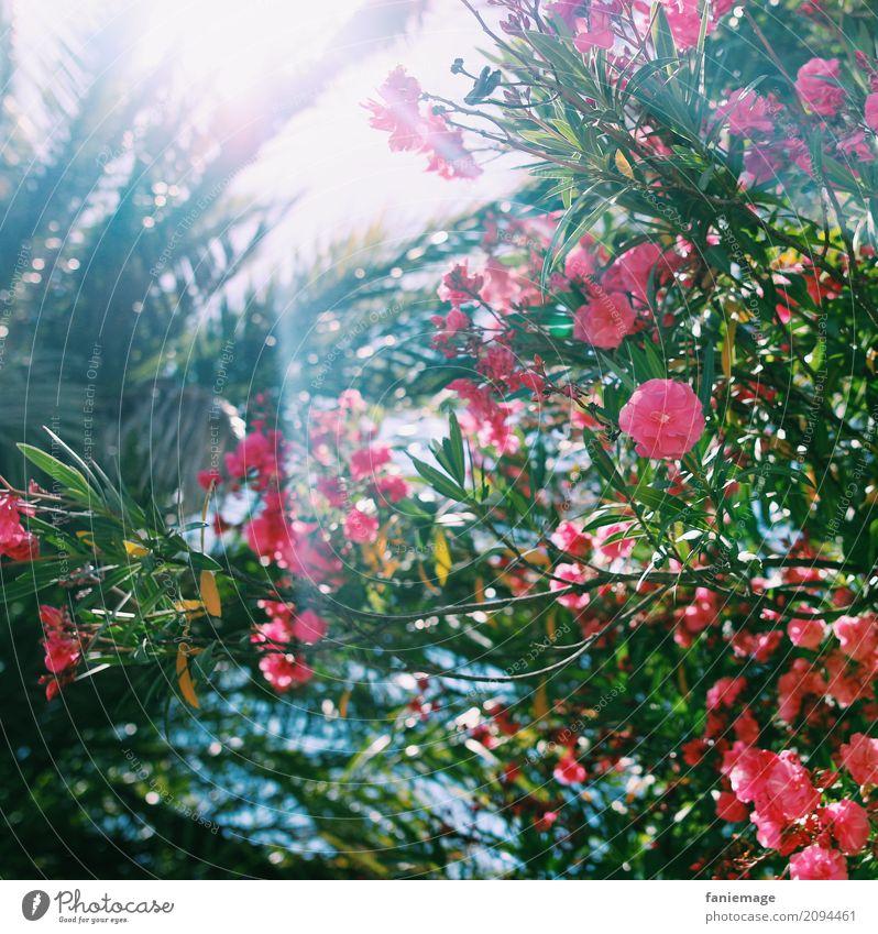 Blumen und Sonne Natur Pflanze Sommer Schönes Wetter Wärme heiß Süden sommerlich Sommerferien mediterran Palme Ferien & Urlaub & Reisen Urlaubsfoto Marseille