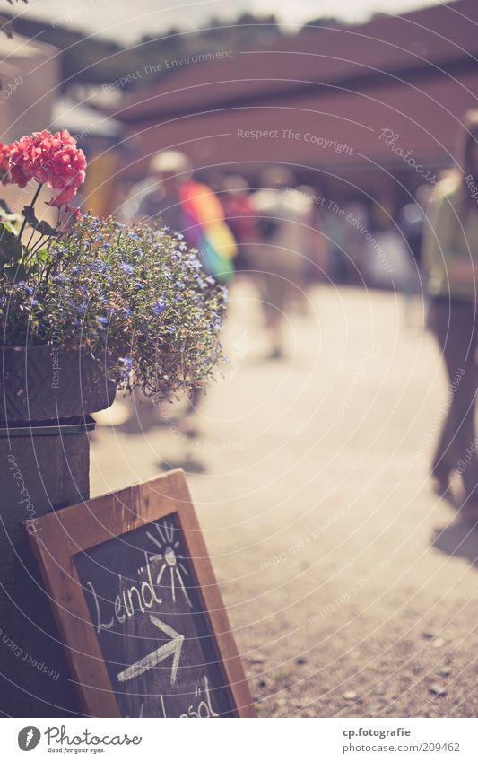 Wochenmarkt Mensch Sonnenlicht Sommer Pflanze Blume Blüte Fußgängerzone bevölkert Platz Marktplatz Dekoration & Verzierung Duft Außenaufnahme Tag Schatten