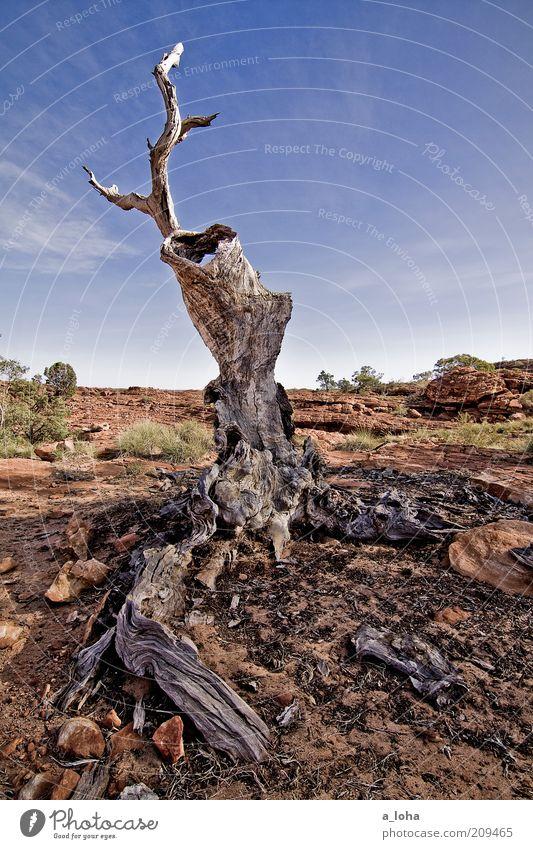 unreal Himmel Natur alt Baum Pflanze Einsamkeit Landschaft Holz Erde außergewöhnlich Wandel & Veränderung Urelemente Vergänglichkeit Wüste trocken
