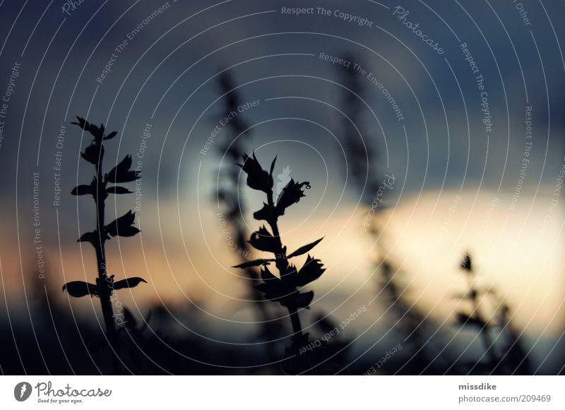 wake up the dawn and ask her why Natur blau Pflanze Sommer ruhig gelb Erholung Umwelt dunkel Herbst grau Traurigkeit Luft träumen Stimmung Klima