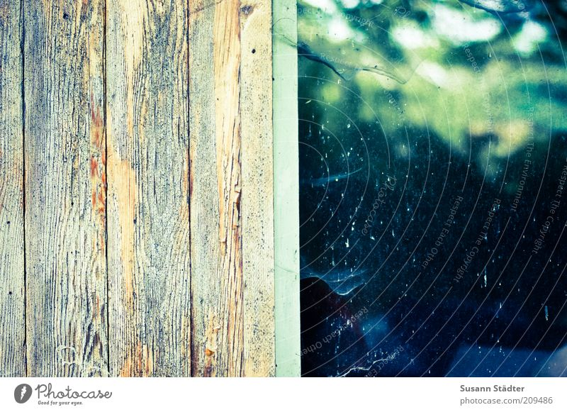 Spinnenganger schon länger da Fenster Holz Hütte Maserung Spinnennetz abblättern Farblosigkeit Haus Wand Fensterrahmen Spinngewebe Wandtäfelung