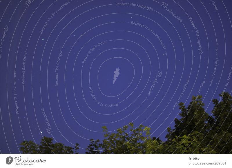 Sternenhimmel Ferne Freiheit Sommer Umwelt Pflanze Luft Himmel Wolkenloser Himmel Nachthimmel Baum Farbfoto Außenaufnahme Menschenleer Abend Dämmerung Kontrast