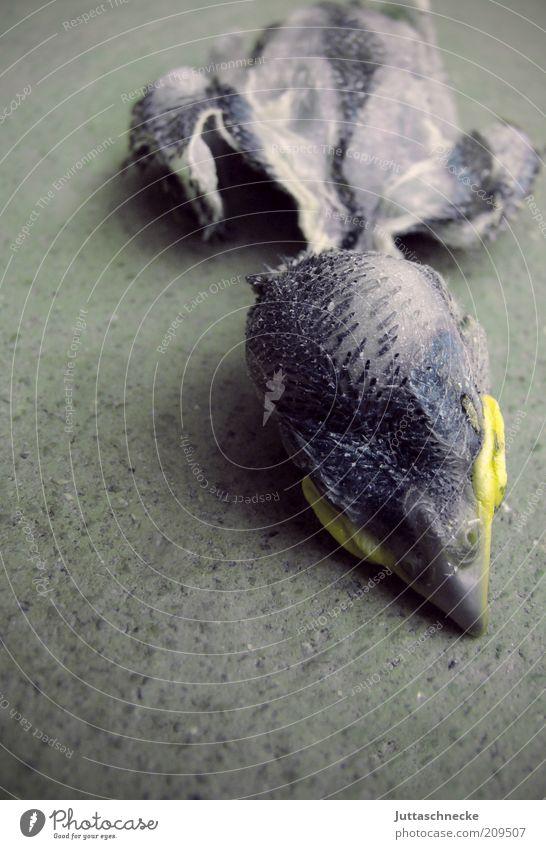Sorrow Verlierer Tier Wildtier Totes Tier Vogel Schnabel 1 Tierjunges liegen Traurigkeit trist grau Trauer Tod Natur grausam Farbfoto Gedeckte Farben