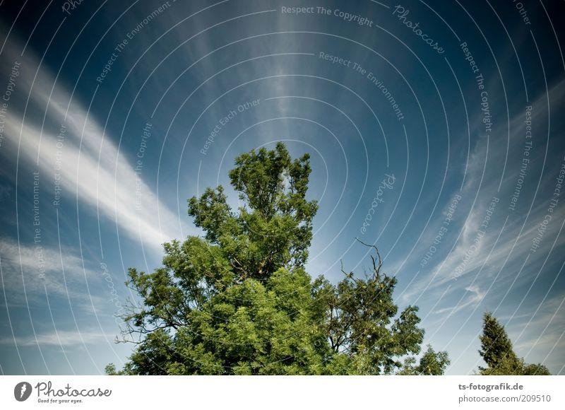 grüner Lungenzug Umwelt Natur Landschaft Pflanze Urelemente Luft Himmel Wolken Klima Wetter Schönes Wetter Baum Waldsterben himmelwärts grüne Lunge Sauerstoff