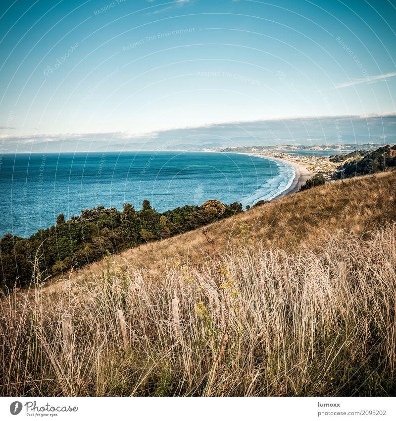 endless beaches Umwelt Natur Landschaft Sommer Schönes Wetter Gras Küste Strand Meer Pazifik Pazifikstrand blau braun Neuseeland Bay of Plenty Ohope Nordinsel
