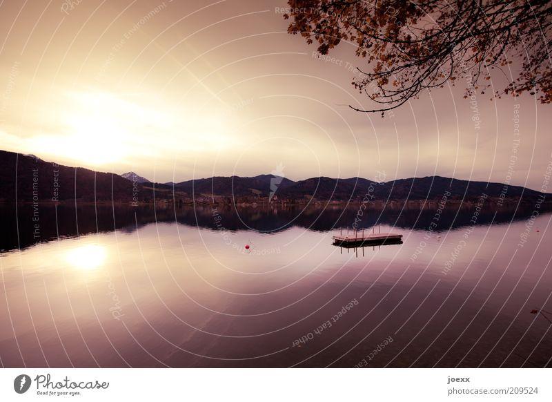 Einsame Insel Wasser schön Himmel Sonne ruhig See Landschaft Zufriedenheit braun Küste groß Ast Bayern Sonnenuntergang Reflexion & Spiegelung Stimmungsbild