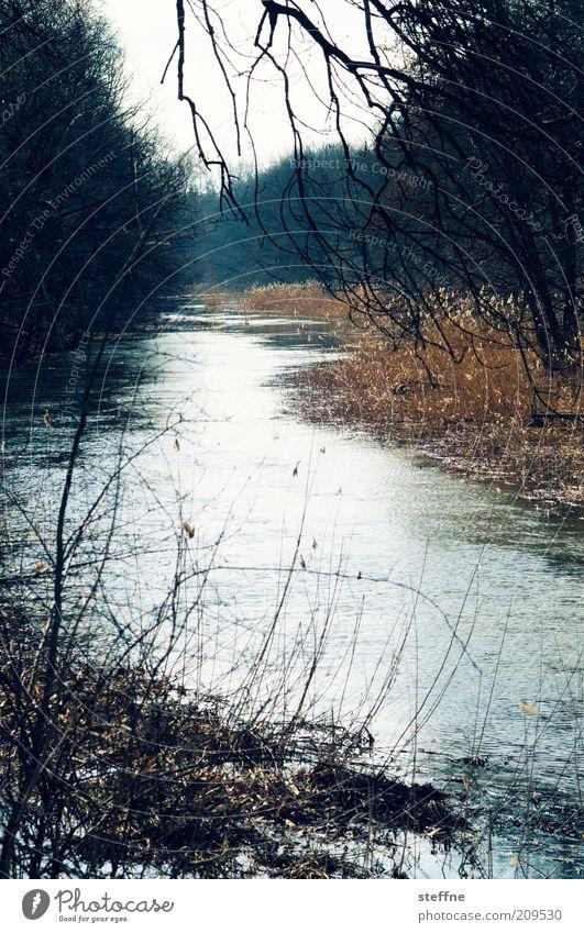 Renaturierung Natur Baum Wald Landschaft Herbst natürlich Sträucher Ast Fluss Zweig Flussufer Bach