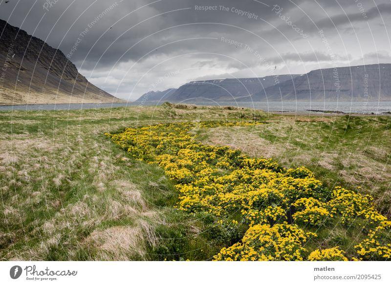 Sumpfdotterblumenweg 2 Himmel Natur Pflanze blau grün Wasser Landschaft Wolken Berge u. Gebirge gelb Frühling Wiese Küste Gras grau Felsen