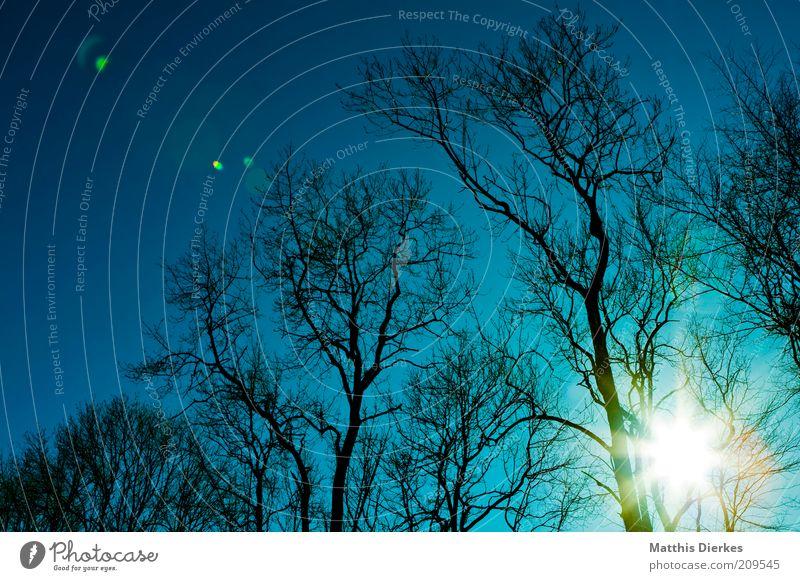 Bäume Umwelt Natur Landschaft Pflanze Urelemente Himmel Sonne Sonnenaufgang Sonnenuntergang Sonnenlicht Winter Klima Klimawandel Wetter Schönes Wetter Baum alt