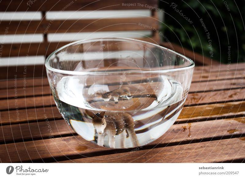 schuessel der erste Tier Nutztier Tiergesicht Aquarium Esel 1 2 bedrohlich Schalen & Schüsseln Wasser Lichtbrechung Tisch Bank Glas Wassertropfen Farbfoto