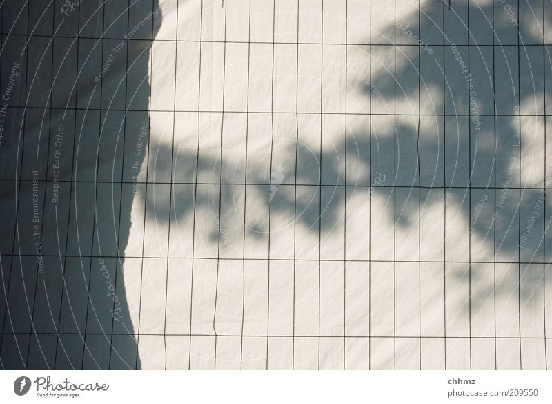 Schattenspiele Baum Zaun Abdeckung Sichtschutz Gitter grau schwarz weiß Baumstamm parallel Barriere gefangen aussperren Farbfoto Gedeckte Farben Außenaufnahme