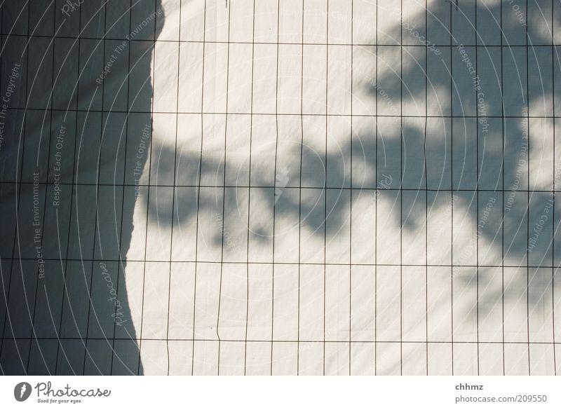 Schattenspiele weiß Baum schwarz grau Zaun Baumstamm gefangen Barriere Gitter parallel eckig Abdeckung aussperren Sichtschutz