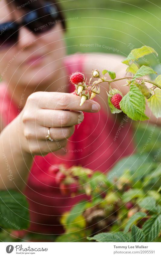 Himbeeren der jungen erwachsenen Frau Sammeln Natur Jugendliche Sommer schön grün Landschaft rot Freude Erwachsene Lifestyle Glück Garten Freiheit