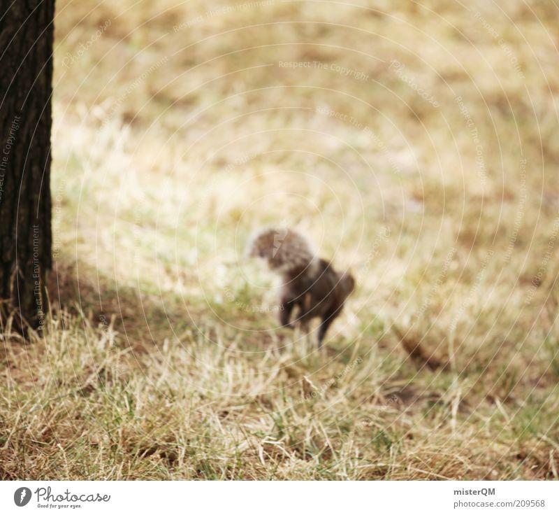 Fluchtversuch. Natur Tier Spielen Park laufen rennen Geschwindigkeit ästhetisch Dieb Schwanz frech toben Eichhörnchen Angsthase
