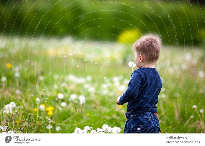 Pusteblumenpusten Mensch Kind Natur weiß Blume grün blau Pflanze Freude Junge Wiese Spielen Gras Glück Zufriedenheit Stimmung
