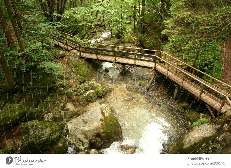 Tamed Nature Natur Wasser grün Baum Ferien & Urlaub & Reisen Pflanze Sommer Wald Umwelt Landschaft Berge u. Gebirge Wege & Pfade Stein Freizeit & Hobby Felsen wild