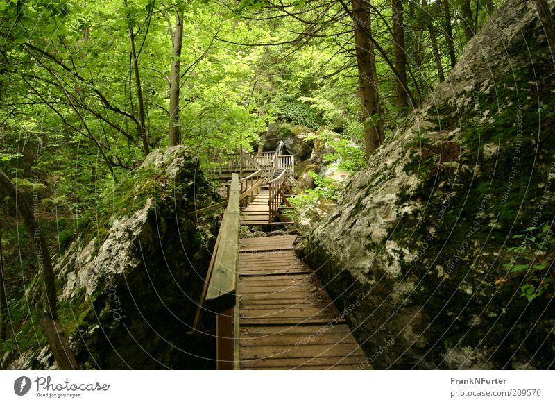 Stairway to Green Hell Natur grün Baum Ferien & Urlaub & Reisen Pflanze Sommer Wald Umwelt Landschaft Berge u. Gebirge Holz Wege & Pfade Freizeit & Hobby Felsen