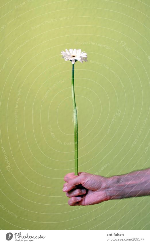 DÄÄÄÄÄÄÄ!!! Mensch Mann Hand grün weiß Pflanze Blume Blüte Glück Erwachsene Freundschaft Arme Finger ästhetisch maskulin natürlich