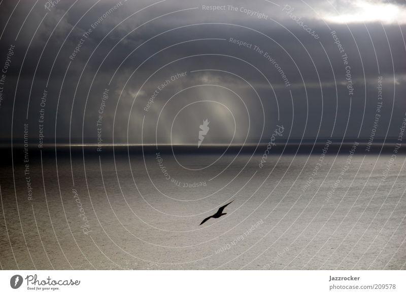 Seagull Atlantic Sea Natur Wasser Himmel Meer Ferien & Urlaub & Reisen Wolken Tier Ferne Erholung Gefühle Freiheit grau Regen Landschaft Luft Stimmung