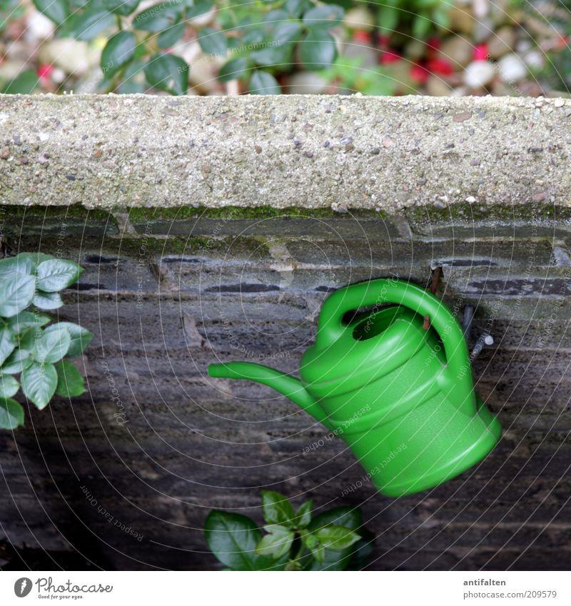 Gießkanne Sommer Häusliches Leben Mauer Mauerpflanze Mauerstein Natur Pflanze Sträucher Rose Blatt Garten Wand Fassade Balkon Terrasse gießen Stein hängen grün