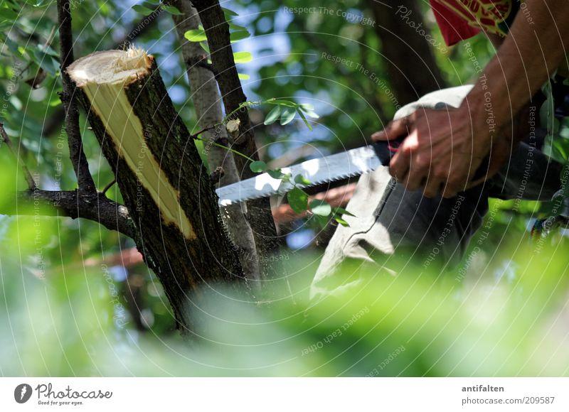 Männerarbeit Mensch Mann Natur Hand Himmel Baum grün Sommer Garten braun Metall Erwachsene Arme Finger Abenteuer Arbeit & Erwerbstätigkeit