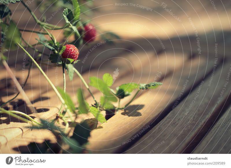 Sommernachmittag grün Pflanze rot Blatt Holz Frucht Wachstum reif Holzbrett Beeren Erdbeeren zierlich Ranke Möbel Holztisch Tischdekoration