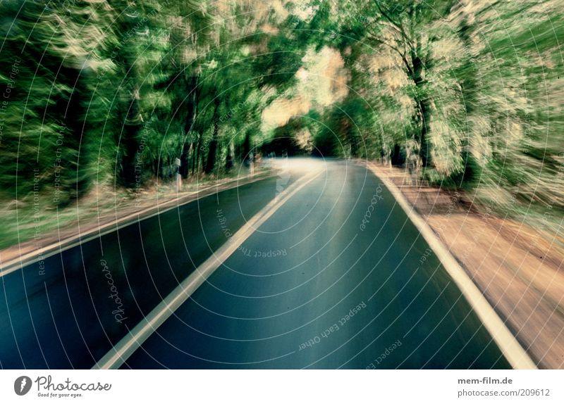 Geschwindigkeitsüberschreitung Straßenverkehr Verkehr Geschwindigkeit Alkoholisiert Rausch Straße Allee Eile Fahrbahn Schwindelgefühl Beschleunigung Raser Mittelstreifen
