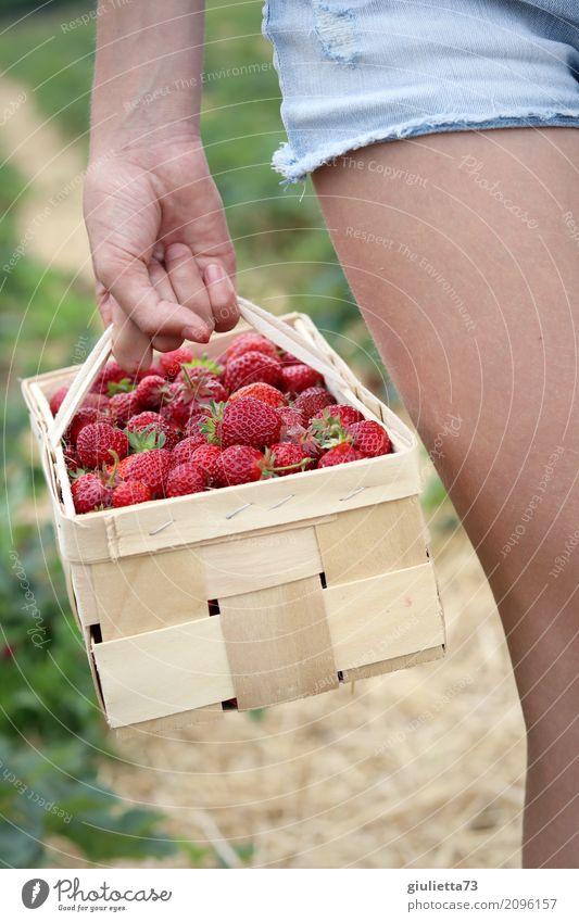 Erdbeer-Ernte Mädchen Hand Beine 1 Mensch 8-13 Jahre Kind Kindheit Sommer Feld Erdbeeren Shorts Arbeit & Erwerbstätigkeit Gesundheit natürlich schön rot