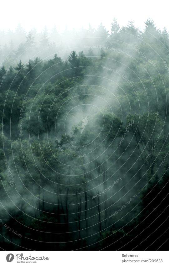 da liegt was in der Luft Ausflug Ferne Umwelt Natur Landschaft Pflanze Wasser Himmel Wolken Sommer Herbst Klima Wetter Wind Nebel Baum Wald ästhetisch dunkel