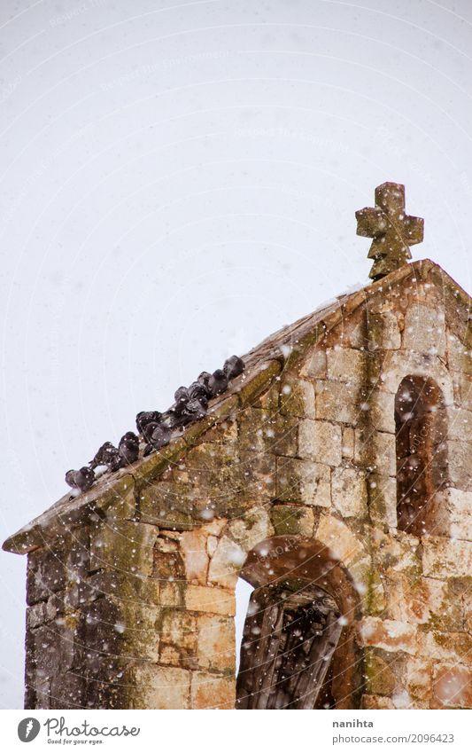 Viele Tauben auf ein Kirchendach an einem schneebedeckten Tag Winter Klima Wetter schlechtes Wetter Schnee Schneefall Tier Wildtier Vogel Tiergruppe Stein Kreuz