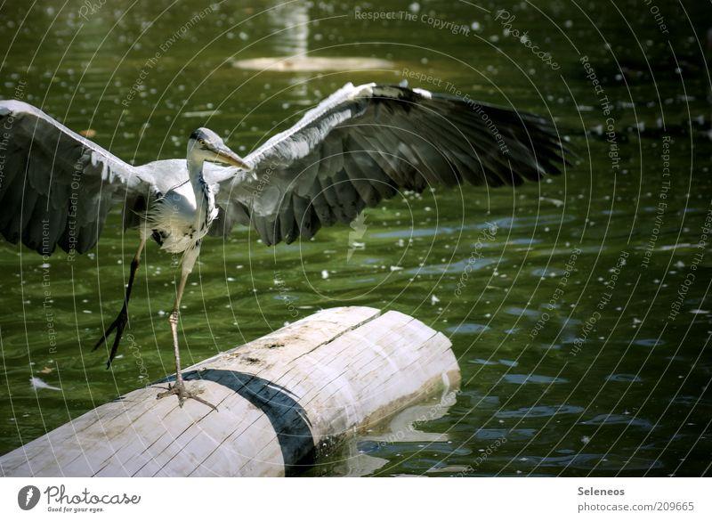 Landeanflug Natur Wasser grün Baum Pflanze Sommer Ferien & Urlaub & Reisen Tier Freiheit Landschaft Umwelt grau Küste See Wellen Ausflug