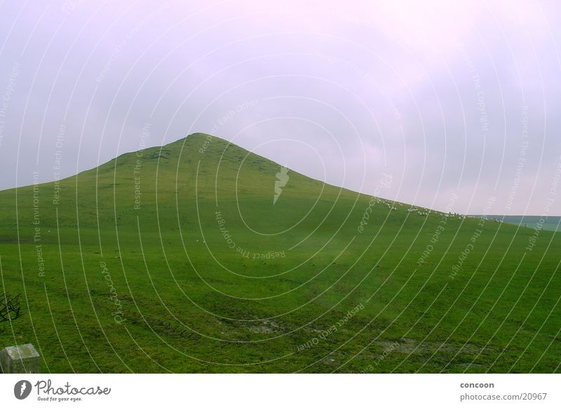Monte Scherbelino England Großbritannien grün Hügel Gras Wiese Berge u. Gebirge Teesside Strukturen & Formen Rasen